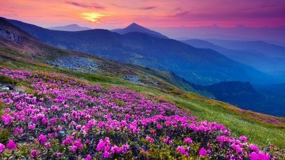 Landscape images in a blog