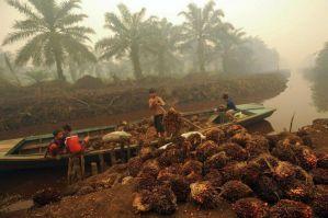Aceite de palma: Lista de productos CON y su equivalente SIN.