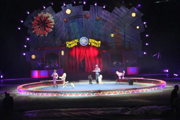 Circus Feb 2015 033