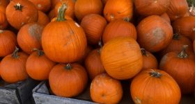 Delaware County PA and Surrounding Area Weekend Events and Fall Family Fun 10/11 – 10/13