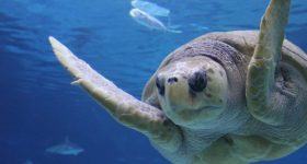 "Take Advantage of ""One Kid Free"" Family Days Now through February 14th at Adventure Aquarium in Camden, NJ"