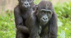Here is a Peek at How the Philadelphia Zoo Is Celebrating This Mother's Day