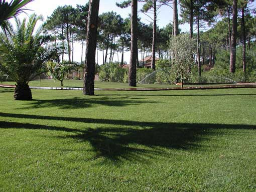 Aménagement de Jardin paysagé