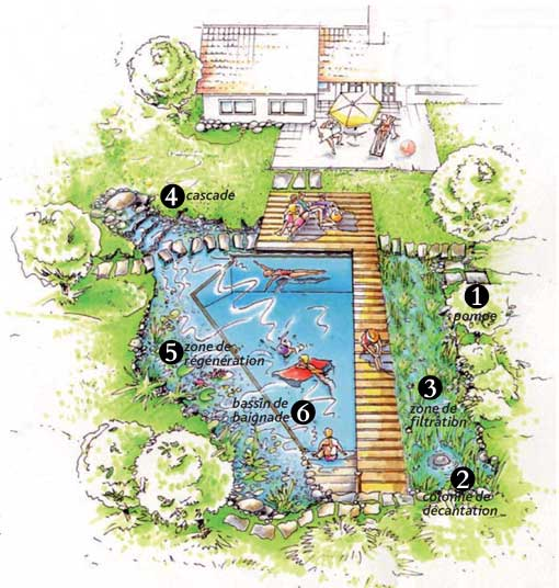 Description des différentes zones d'une piscine naturelle biologique
