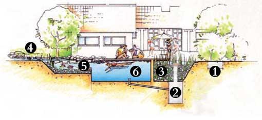 Fonctionnement piscine biologique naturelle