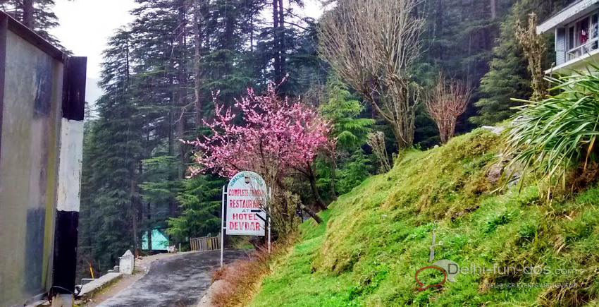Hotel Devdar khajjiar Dalhousie where to stay in Dalhousie things to do in Dalhousie