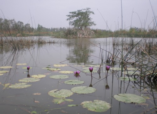 Invitation: World Environment Day at the Yamuna Biodiversity Park