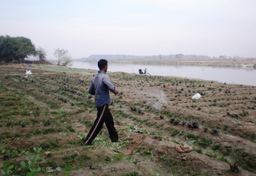 Farming on the Yamuna River floodplains