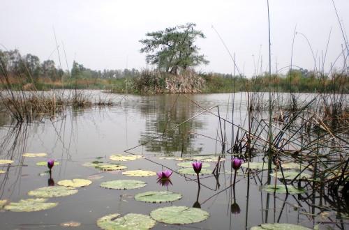 Invite: World Wetlands Day Celebration at Yamuna Biodiversity Park