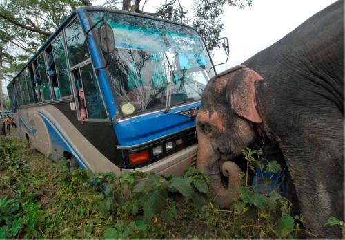 Elephant to Become India's National Heritage Animal
