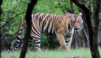 WWF-India Identifies Youth Ambassadors Ahead of