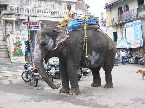 elephant-udaipur