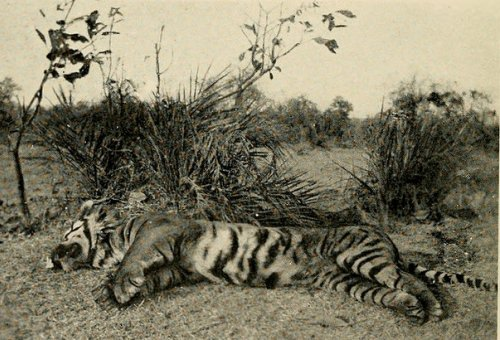 NMML Seminar on 'The Colonial Hunt:  Metropole, Colony and Wildlife in India