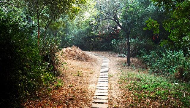 Plantation Drive at Garhi Mandu by DoE on Environment Day
