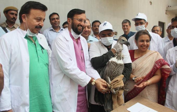 haryana-vulture-introduction