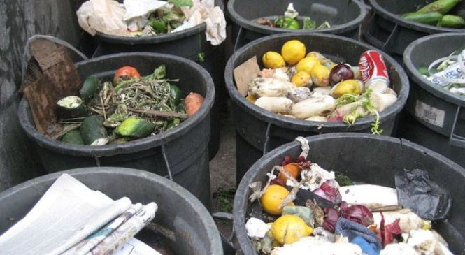Wasting Food Akin to Carbon Crime