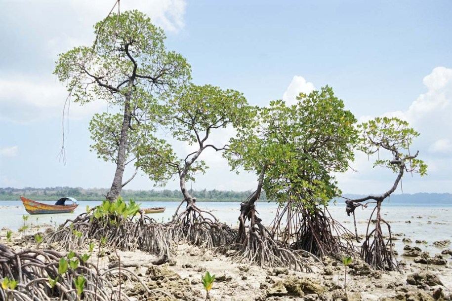 mangroves at Havelock