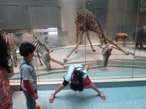 Drink Water like a Giraffe