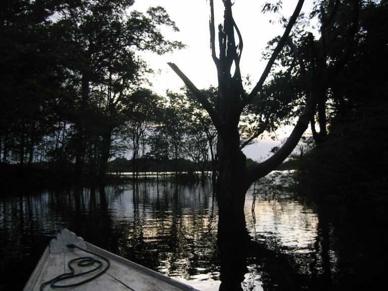 Evening at the amazon forest