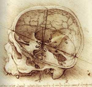 Leonardo da Vinci - Anatomické kresby lebky, hlavy a nervů - lebka zobrazená v řezu, 1489