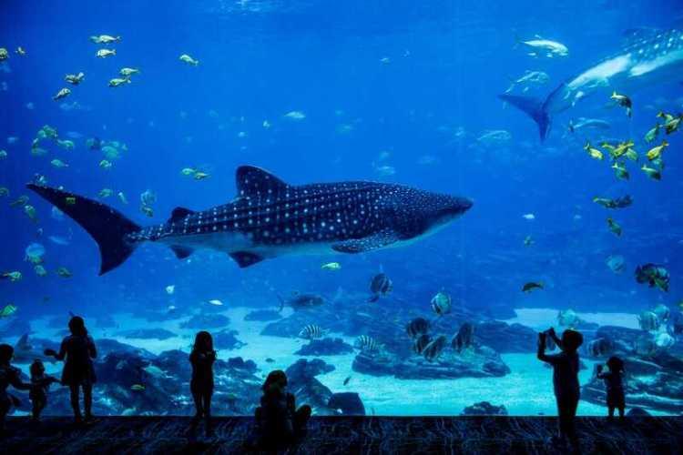 aquarium - field trip ideas for preschoolers