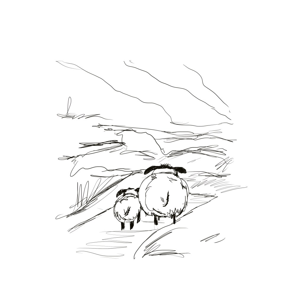 line art drawing of Sheep