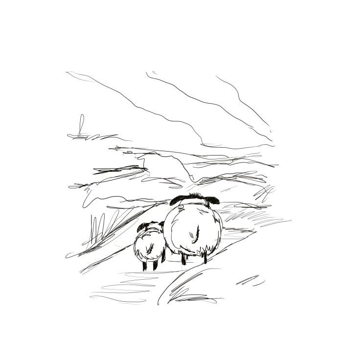 line art drawing of Sheep