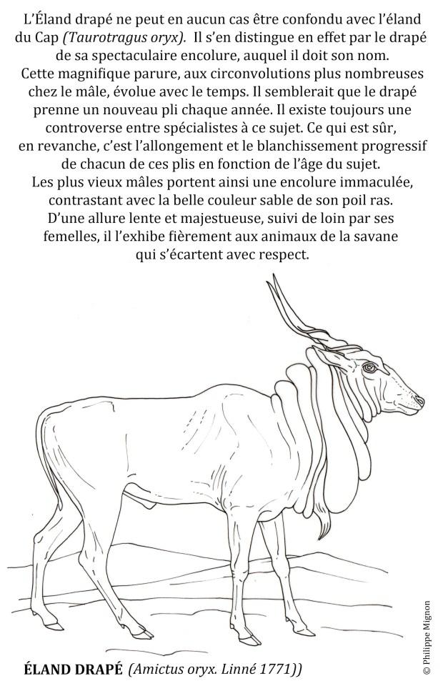 L'éland drapé © Philippe Mignon