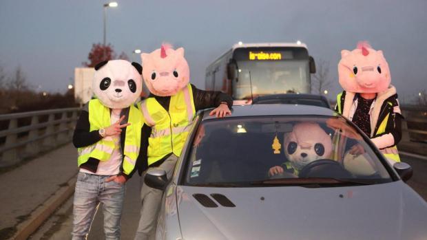 Petits cochons en gilet jaune ©DR