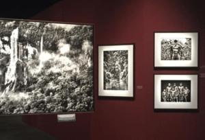 """Sebastião Salgado, """"Salgado Amazônia"""". Accrochages différenciés. Exposition la Philharmonie de Paris, 2021 © Morgana Herrera"""