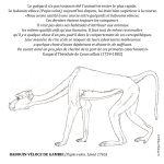 Coloriage - Le babouin véloce de Gambie © Philippe Mignon