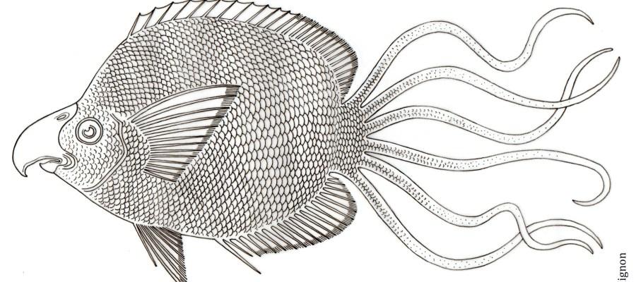 Le chétodon martinet © Philippe Mignon