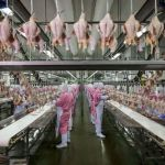 Jiangsu, Chine, 2016, usine de transformation de poulets © George Steinmetz