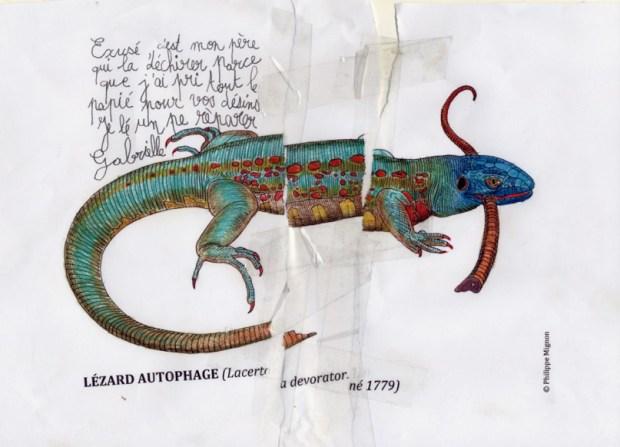 Le lézard autophage colorié par Gabrielle, sur un dessin original de Philippe Mignon
