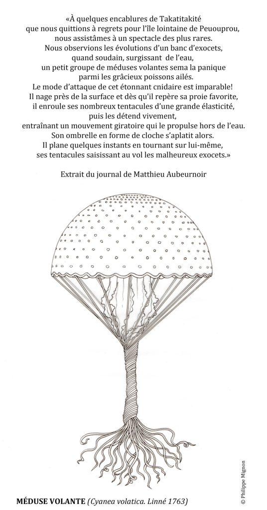 Coloriage - La méduse volante © Philippe Mignon