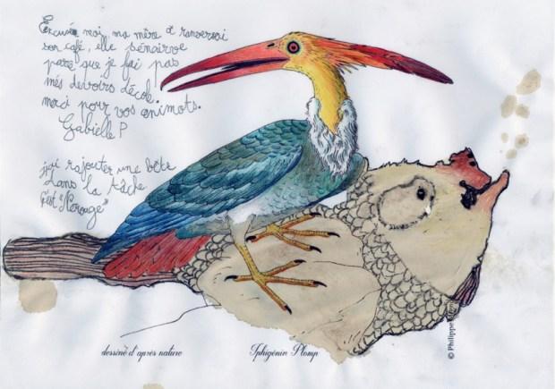 Un oiseau inconnu colorié par Gabielle P. (work in progress) sur un dessin original de Philippe Mignon