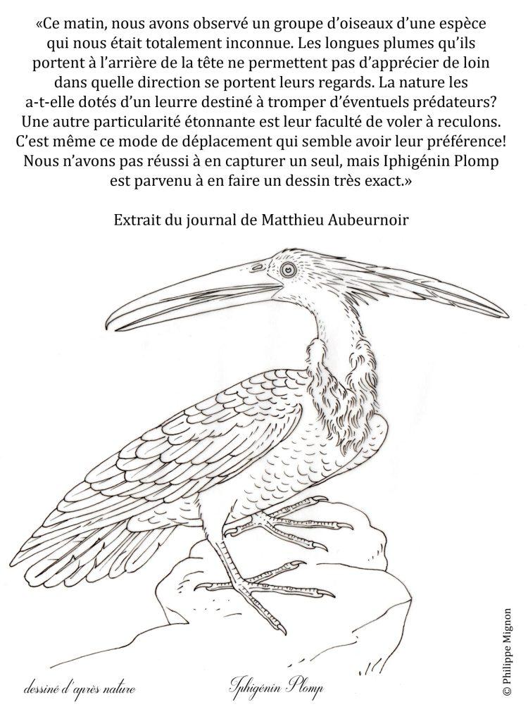 Coloriage - Un oiseau inconnu © Philippe Mignon
