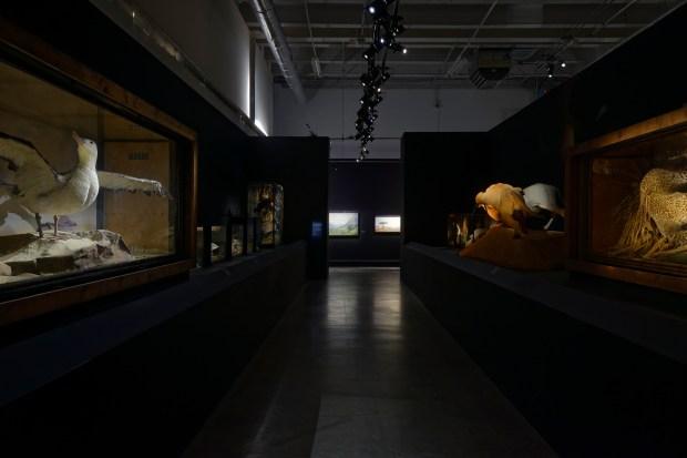 """Vue de l'exposition """"Dioramas"""", Palais de Tokyo. Photo Aurélien Mole"""