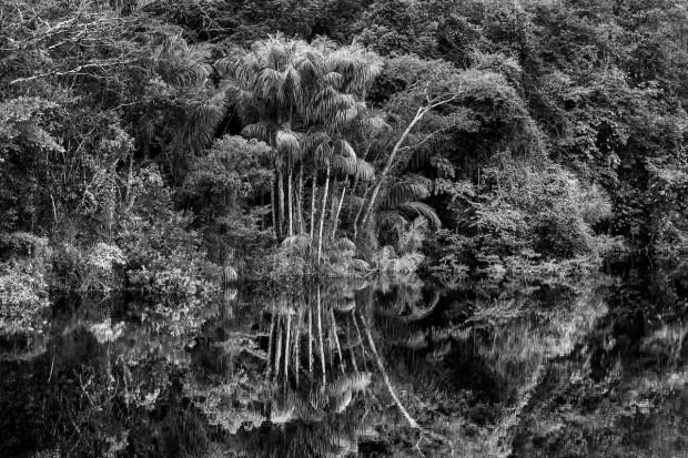 Rio Jaú, État d'Amazonas, 2019 © Sebastião Salgado
