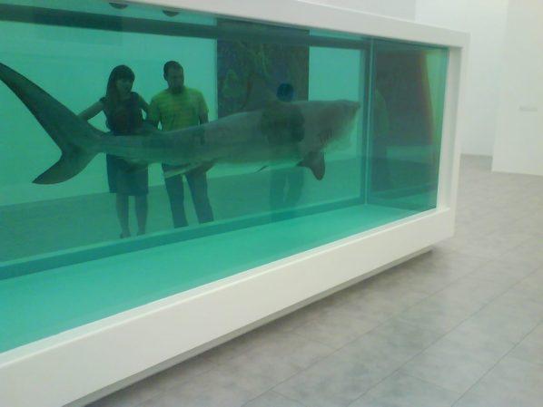 Un des requins de Hirst, art formollement contemporain (DR) Un article d'Edouard Launet