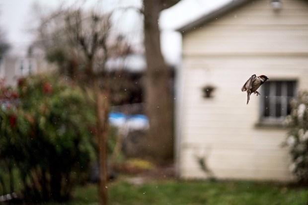 Terri Weifenbach - Des oiseaux - éditions Xavier Barral 2019