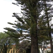 Parque Calderón - these trees are so cool! What are they?