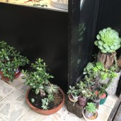 Many shops decorate with live plants.