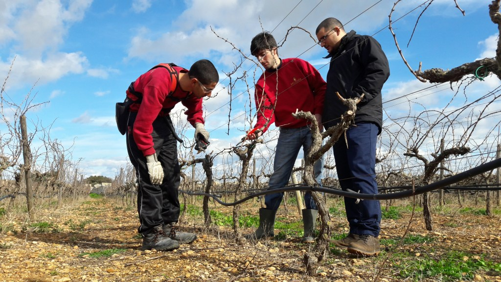 Delicata Winte Winer Vine Pruning