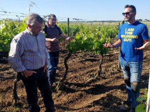 Delicata Wine Prining Vines