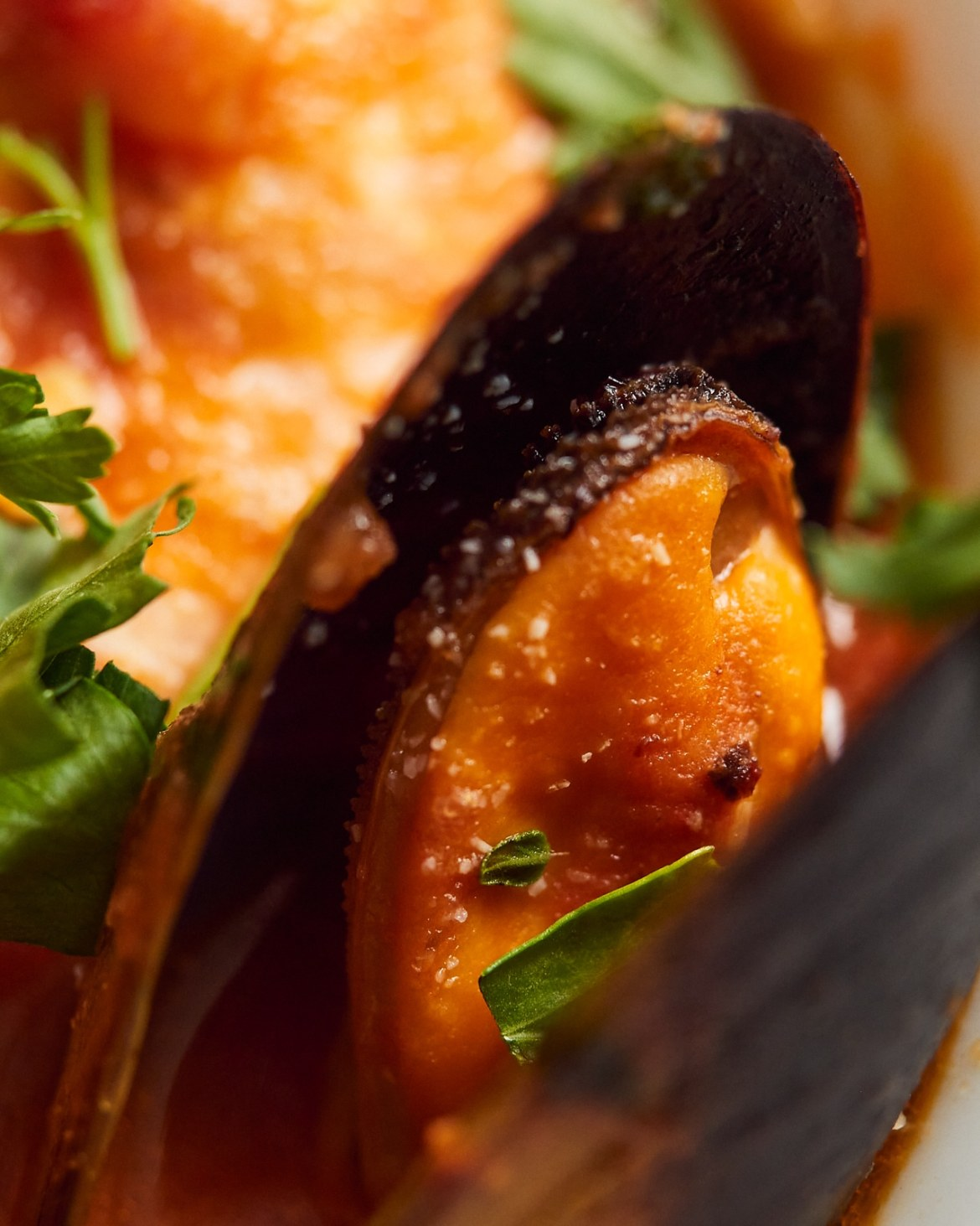mussel in tomato sauce