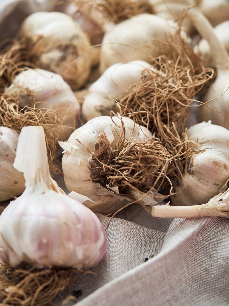 General Information about Garlic