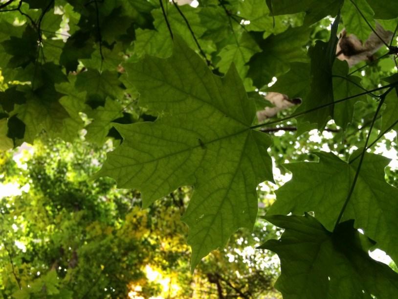 A maple forest dentro do Biodôme estava toda verdinha