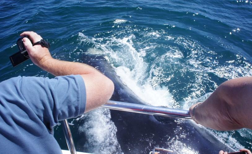 Passeio para visualizar baleia em Hermanus, na Africa do Sul. Por Delicia de Blog.