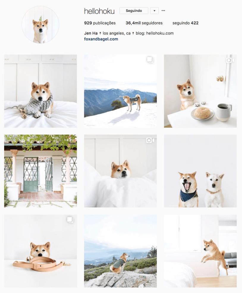 Cachorros para seguir no Instagram: Hello Hoku. Por Delicia de Blog.